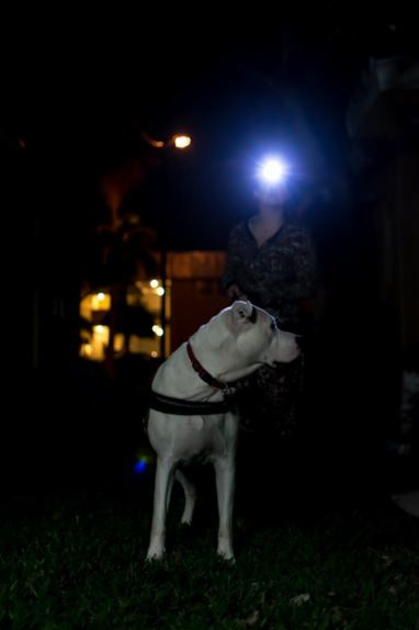 LED headlamp for running by Shining Buddy